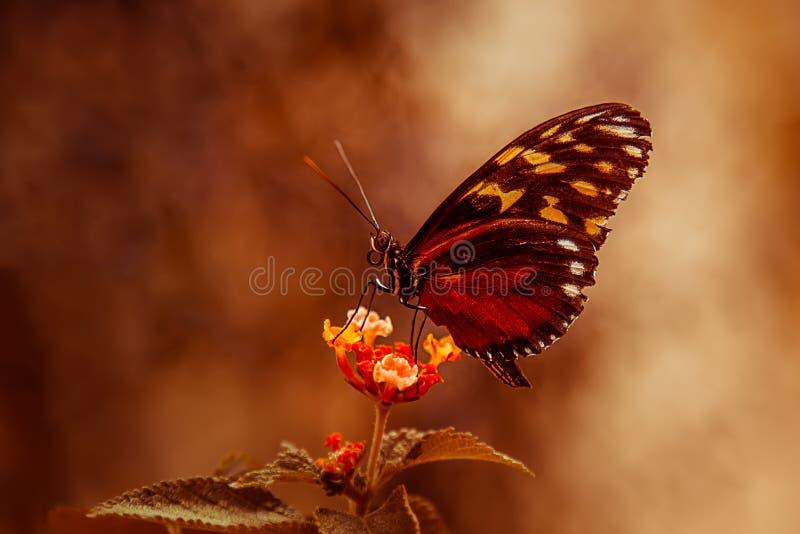 Download Fjäril arkivfoto. Bild av makro, matning, fjäril, profil - 27286744
