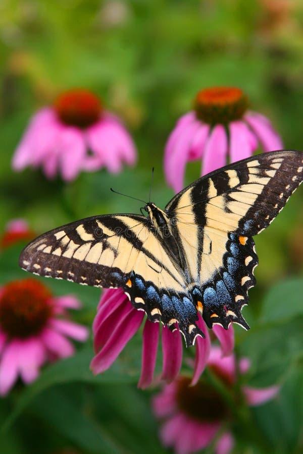 Download Fjäril fotografering för bildbyråer. Bild av fjäril, växt - 275165