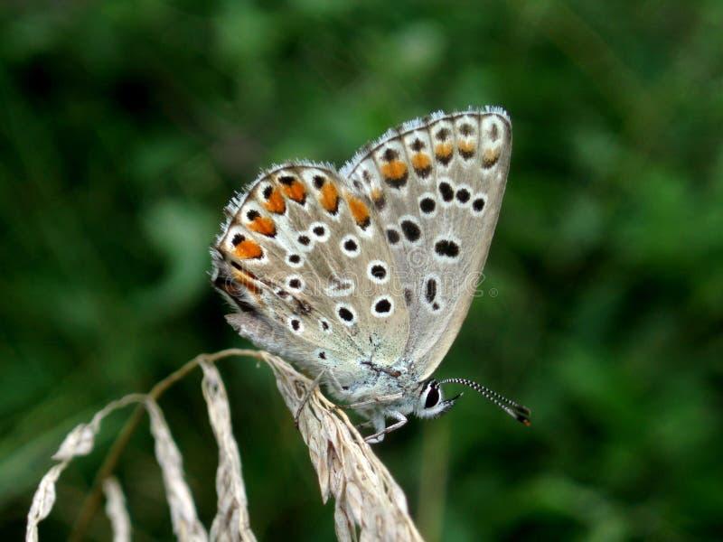 Download Fjäril arkivfoto. Bild av park, plåga, vinge, fluga, färgglatt - 975216