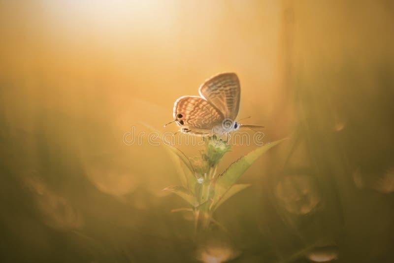 Fjäril djur, makro, bokeh, kryp, natur, royaltyfri foto