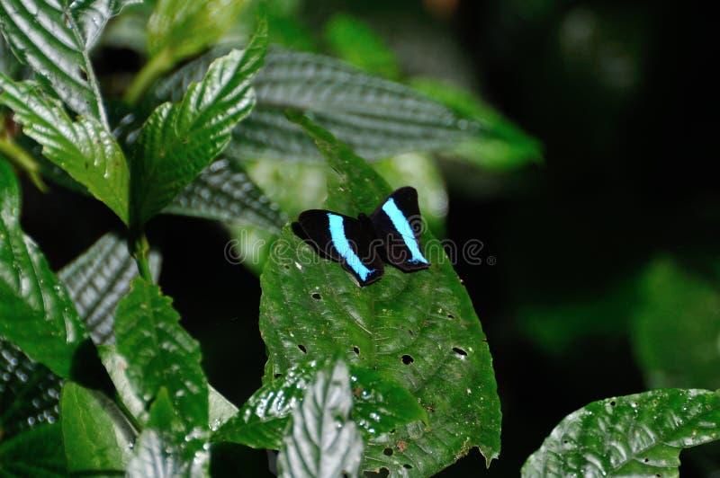 Fjäril i Costa Rica royaltyfri fotografi