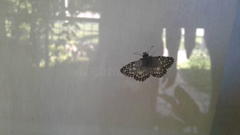 Fjäril i fönster arkivfoto