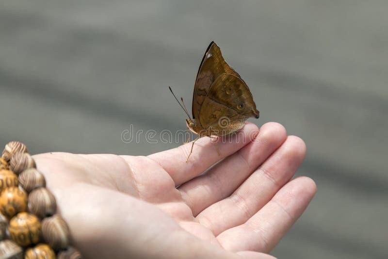 Fjäril i handen, slut upp royaltyfria foton