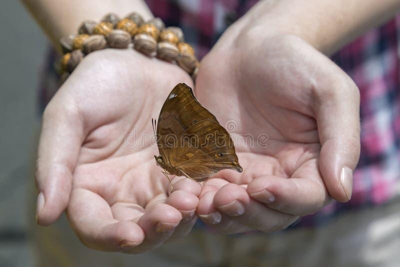 Fjäril i handen, slut upp arkivfoton