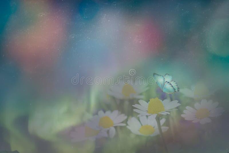 Fjäril i kamomillen på en äng på natten i det glänsande månskenet på naturen i blåa och purpurfärgade signaler, makro sagolikt royaltyfria foton