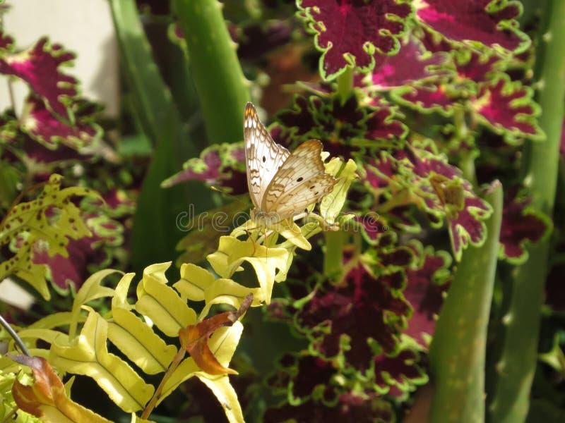 Fjäril i natur royaltyfri foto
