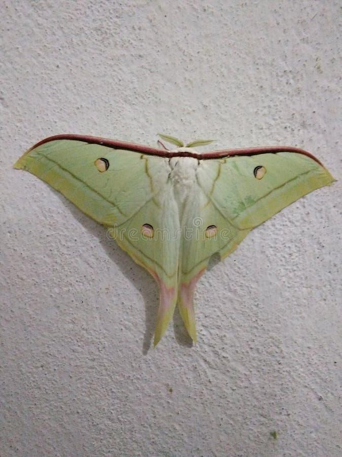 Fjäril i vägg royaltyfri foto