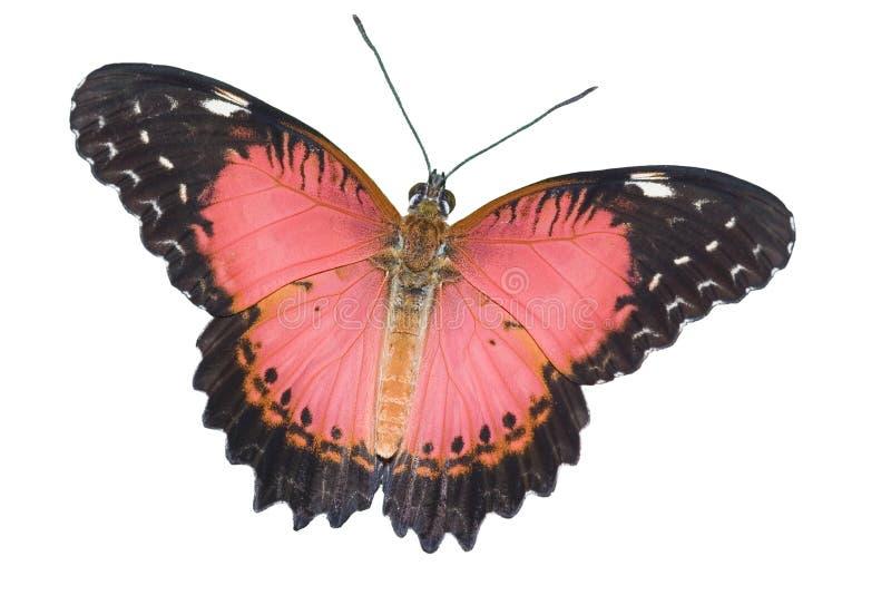fjäril isolerad white arkivbild