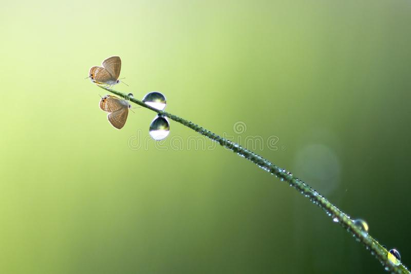 Fjäril kryp, makro, natur, djur, djurliv, bokeh, däggdjur, smallworld, indonesia, royaltyfria foton