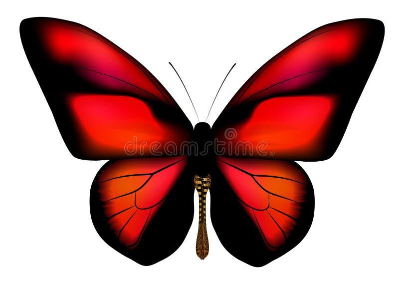 Fjäril med röda vingar royaltyfri illustrationer