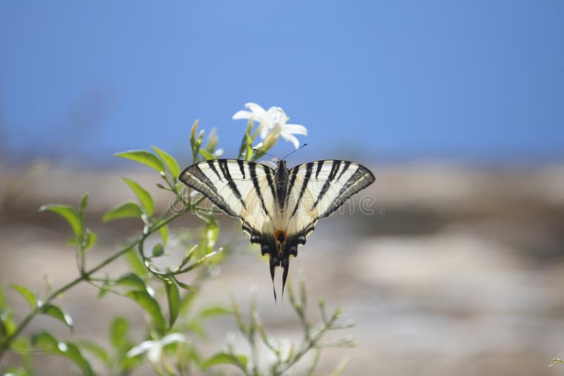 Fjäril och blomma arkivbild