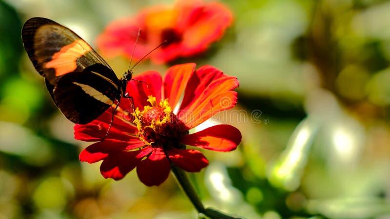 Fjäril och blomma! royaltyfria bilder