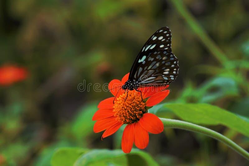 Fjäril och blomman arkivfoto