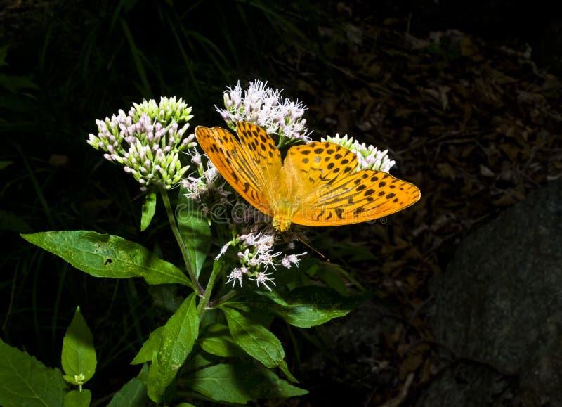 Fjäril och blommor arkivbild
