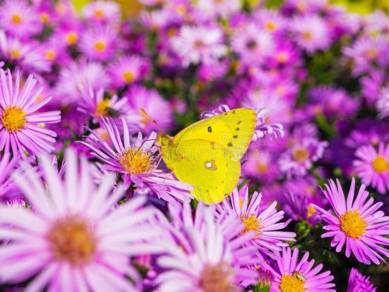 Fjäril och blommor 5 arkivfoton