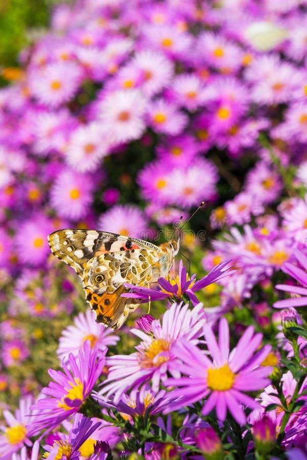 Fjäril och blommor 3 royaltyfria bilder