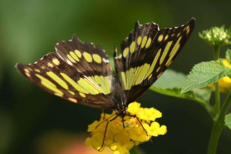 Fjäril på blom royaltyfri fotografi