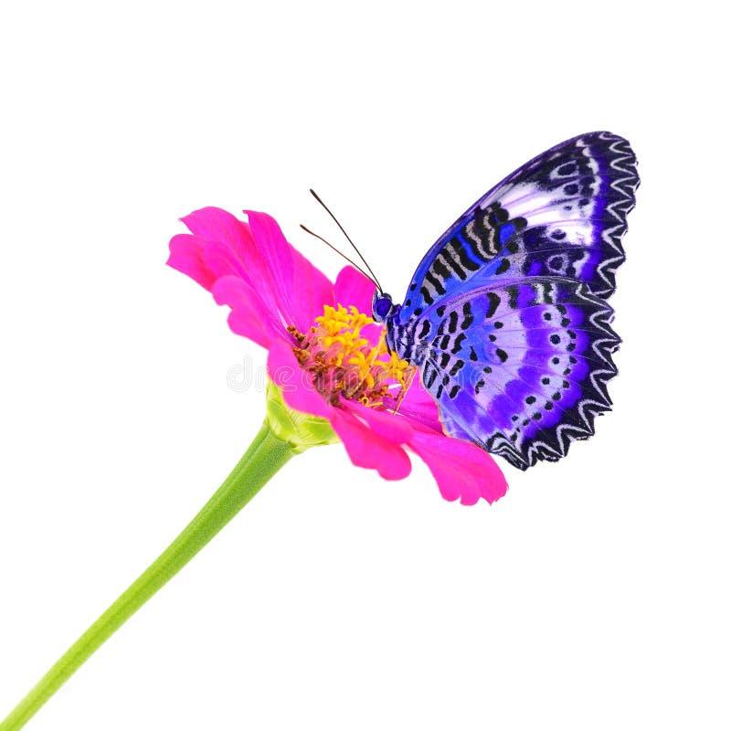 Fjäril på blomma royaltyfri fotografi