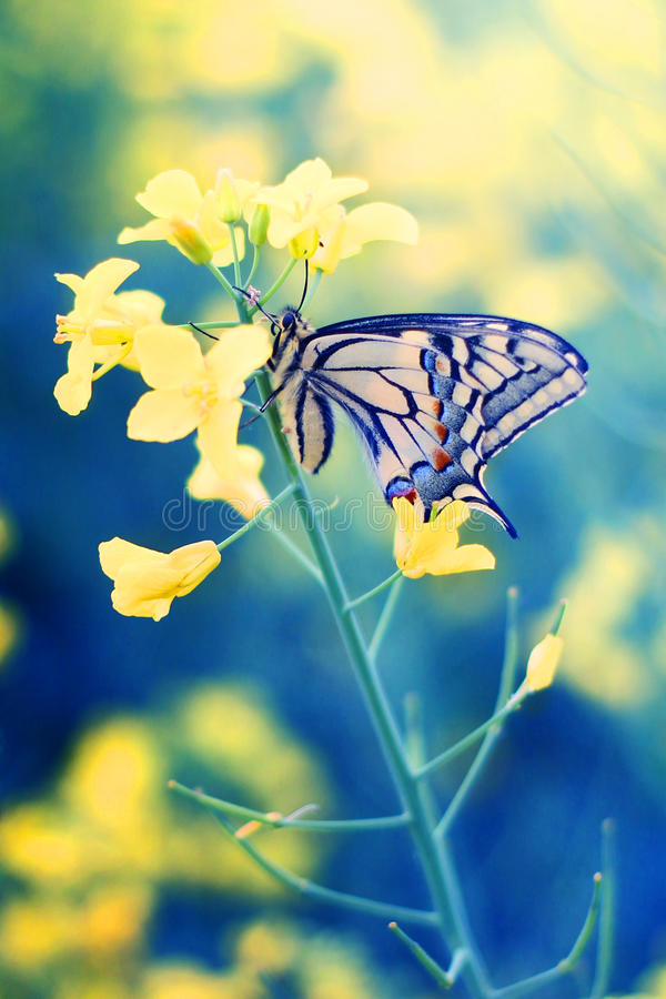Fjäril på blomma arkivfoto