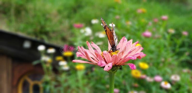 Fjäril på blomman royaltyfri fotografi