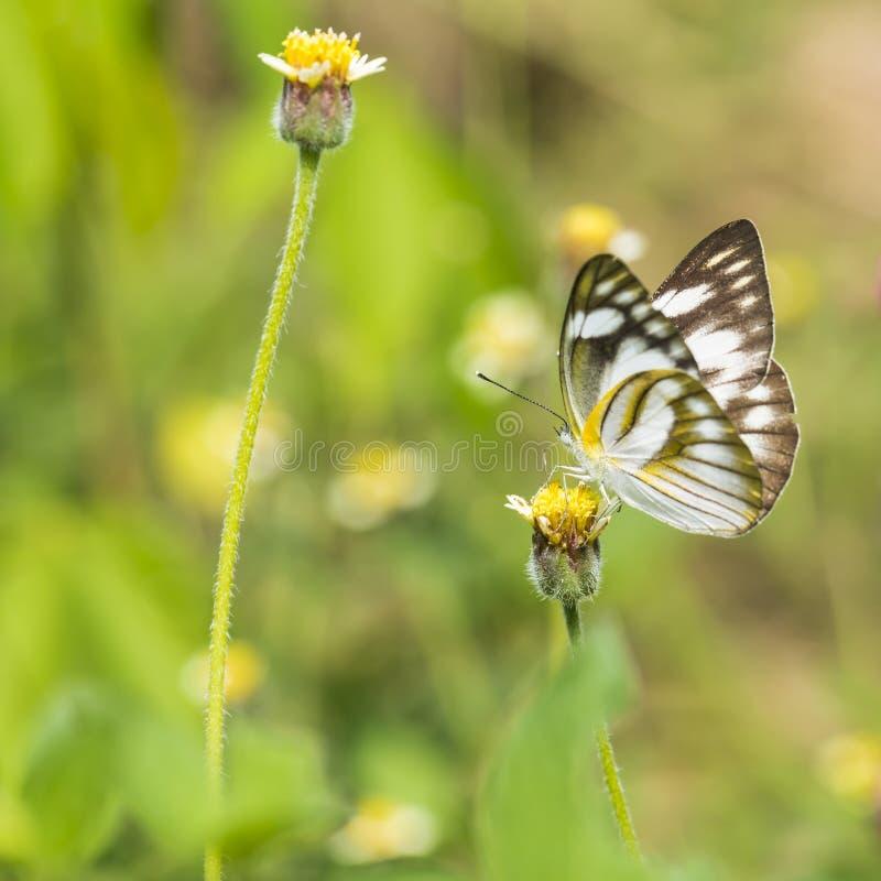 Fjäril på den gula blomman med gräs royaltyfri fotografi
