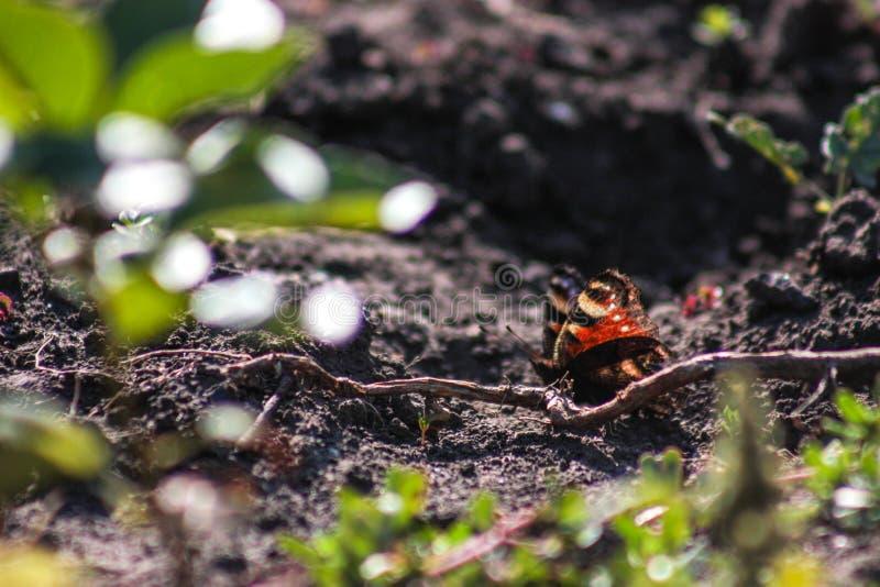 Fjäril på en förgrena sig fotografering för bildbyråer