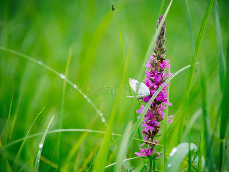 Fjäril på ett blad av blomman i vår royaltyfria foton