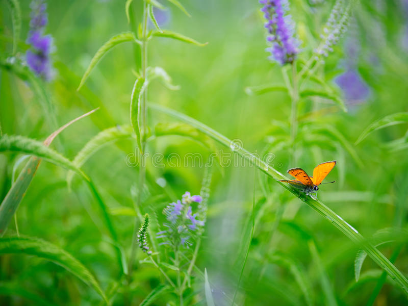 Fjäril på ett blad av blomman i vår arkivbilder
