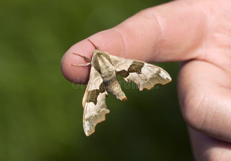 Fjäril på fingret arkivbild