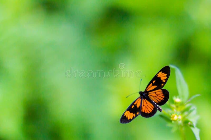 Fjäril på gräsplan royaltyfri foto