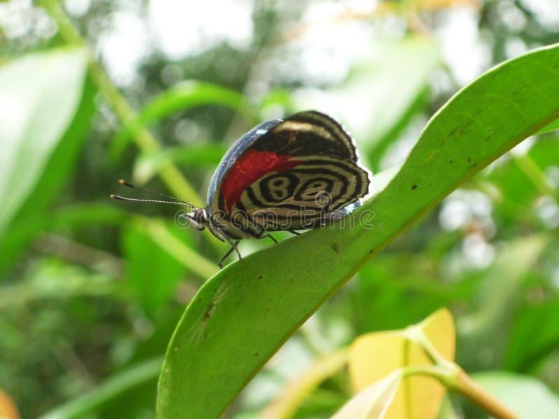 Fjäril på Iguazu Falls arkivbild