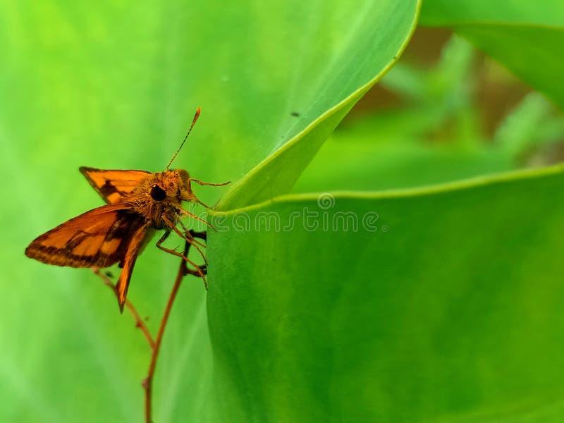 Fjäril på leafen fotografering för bildbyråer