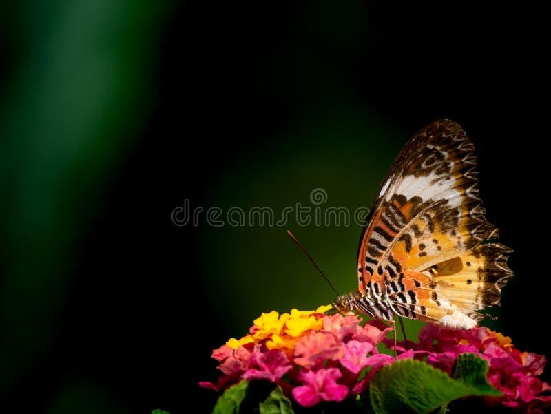Fjäril som sätta sig på buketten av häckblommor arkivfoto
