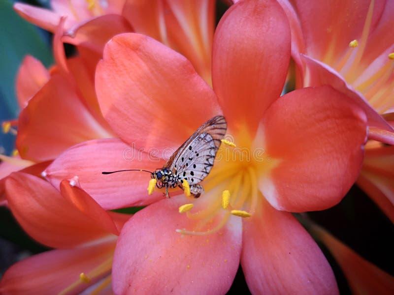 Fjäril som sitter på kronbladet av en rosa blomma royaltyfri fotografi