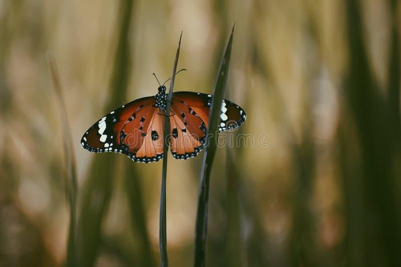 Fjäril som vilar på floran royaltyfria bilder