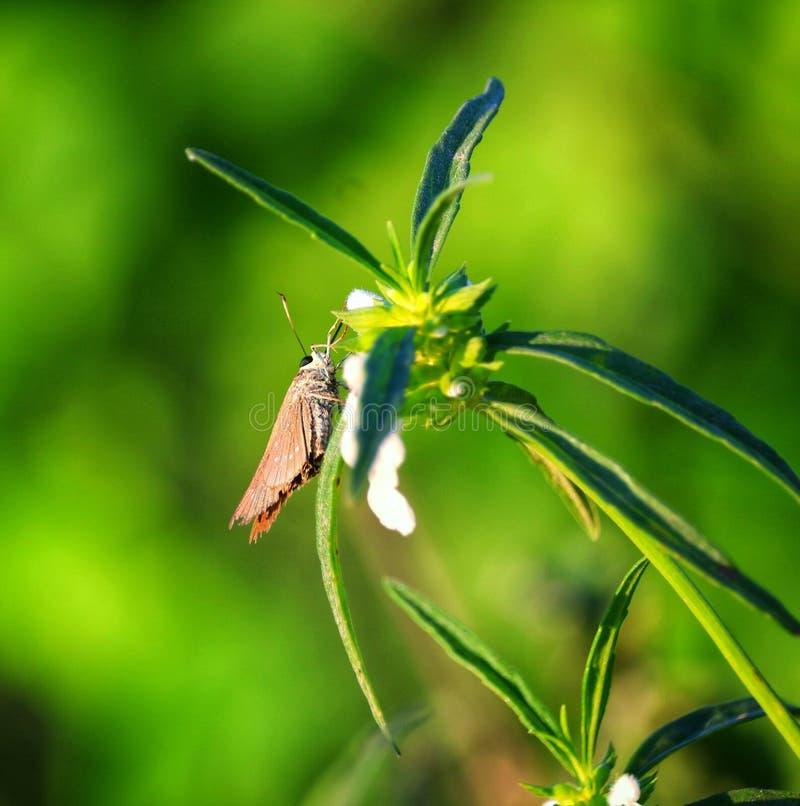 fjärilar royaltyfri foto