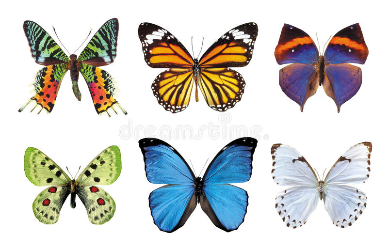 fjärilar royaltyfri illustrationer