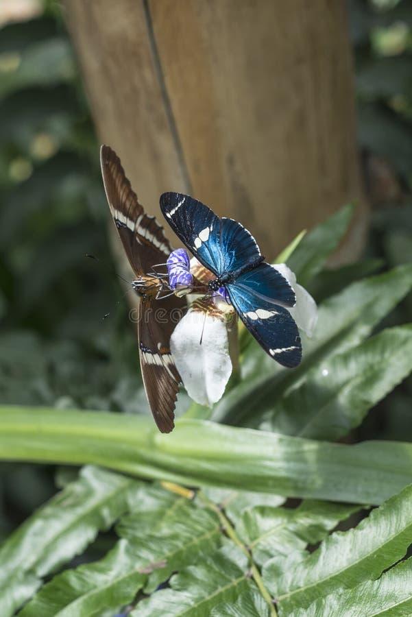 Fjärilar Ecuador royaltyfria foton