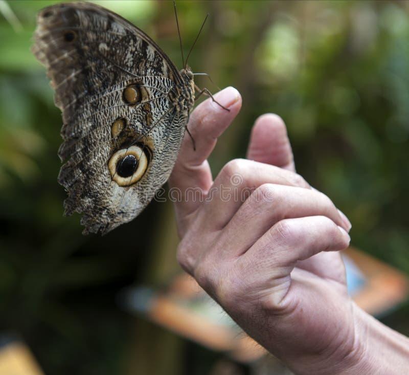 Fjärilar i en ekologisk oas royaltyfria foton