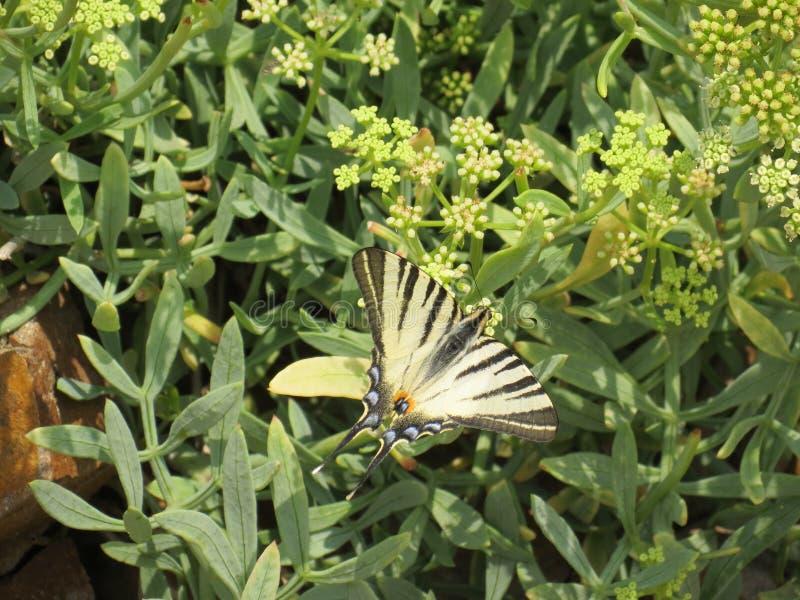 Fjärilar med den rikaste variationen av färgläggning royaltyfria bilder