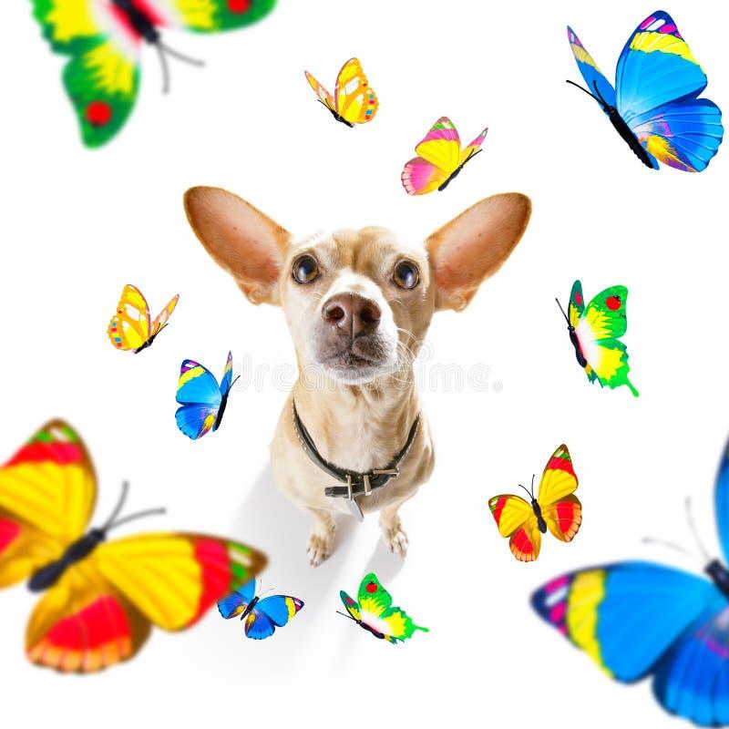 Fjärilar och en förälskad hund royaltyfri foto