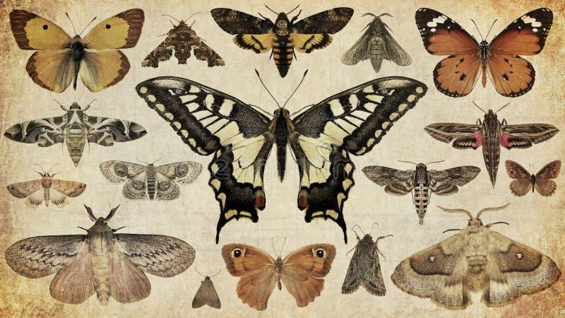 Fjärilar och malar arkivbilder