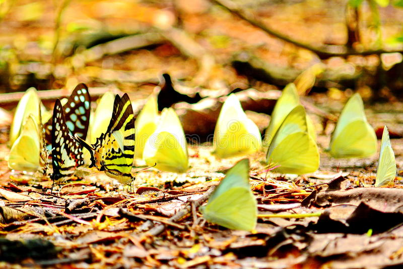 Fjärilar och vänner arkivbild