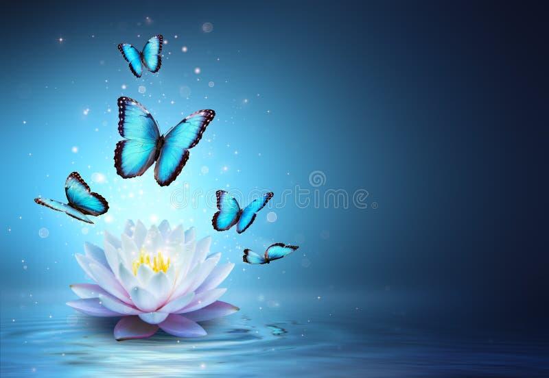 Fjärilar och Waterlily i vatten royaltyfri bild