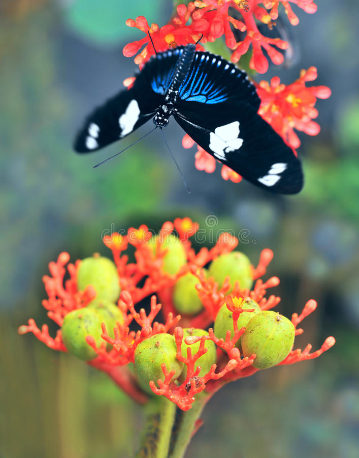 Fjärilar på den exotiska tropiska blomman arkivbild