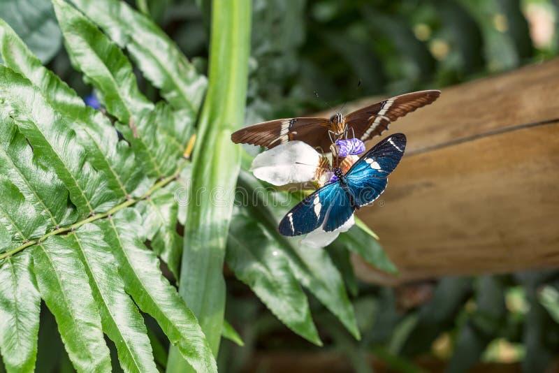 Fjärilar på den exotiska tropiska blomman, Ecuador royaltyfri foto
