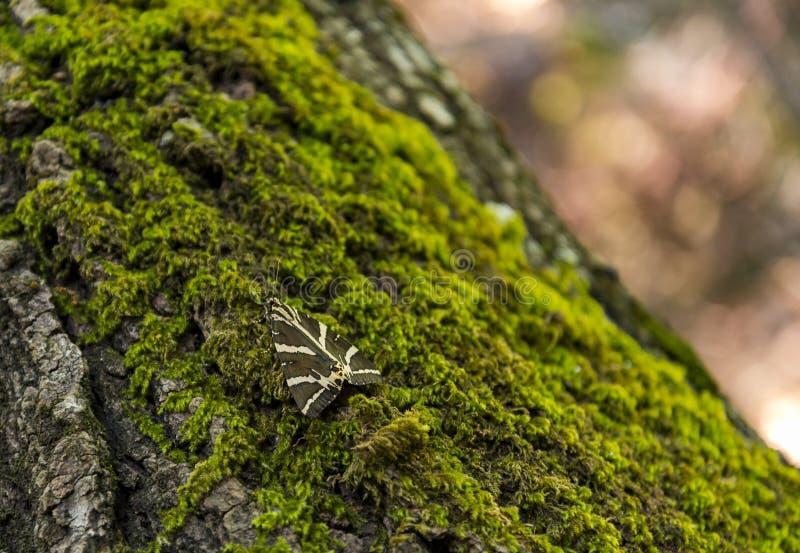 Fjärilar på träd i en dal på Rhodes arkivfoton