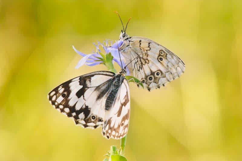 Fjärilar som värma sig i solen royaltyfri foto