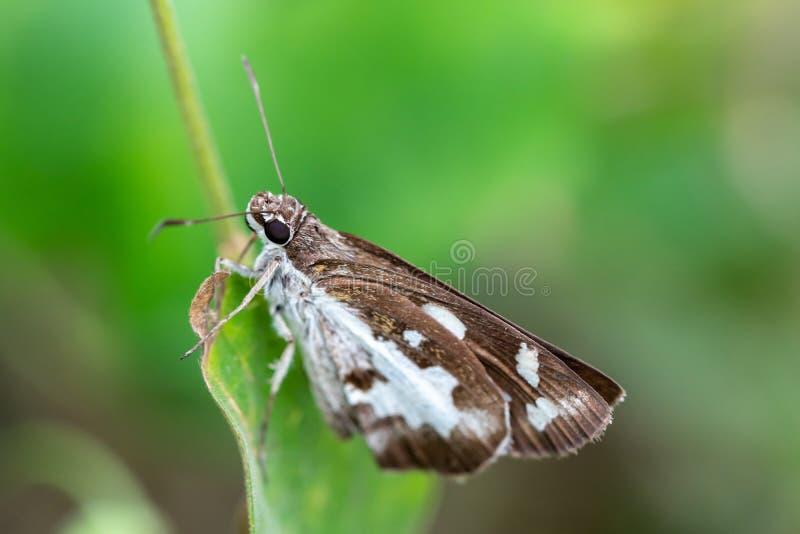 Fjärilen på gräsplan lämnar Fjäril med gröna träd arkivfoto