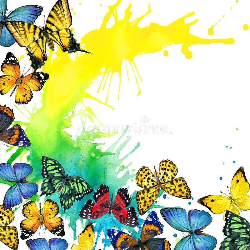 Fjärils- och vattenfärgfärgstänkbakgrund royaltyfri illustrationer